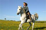 Pferde prägen das St. Johanner Albland