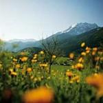 Berchtesgaden_Almwiese_3BFW9579