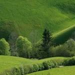 Berchtesgaden_Wiese_3BFW9513