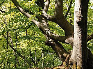 Biosphärenreservat Schwäbische Alb