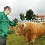 Fink Highland Rind Weide Aglishardt