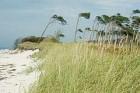 Dünenwanderung: Ohne Menschen wären Sandstrände nicht weiß, sondern grasgrün.