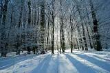 Winter_baum_84FB8547