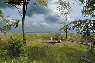 Weitblick – über 1400 Hektar Fichtenbestände fielen, damit natürlicher Mischwald nachwächst.
