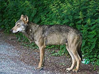 Wolf-Stockach-Quelle-Peter-