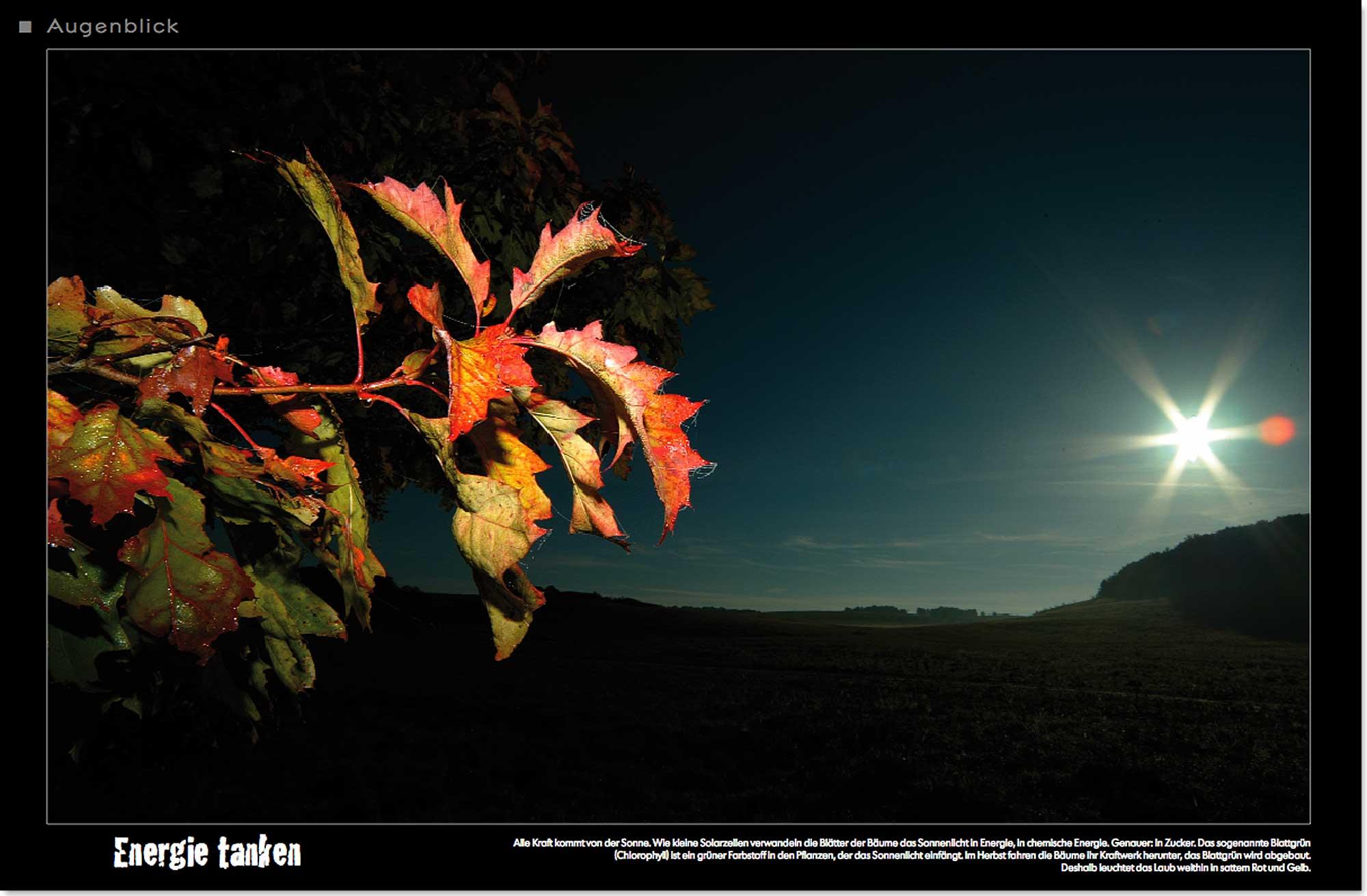 Herbst_Ahorn_Sonnenuntergang