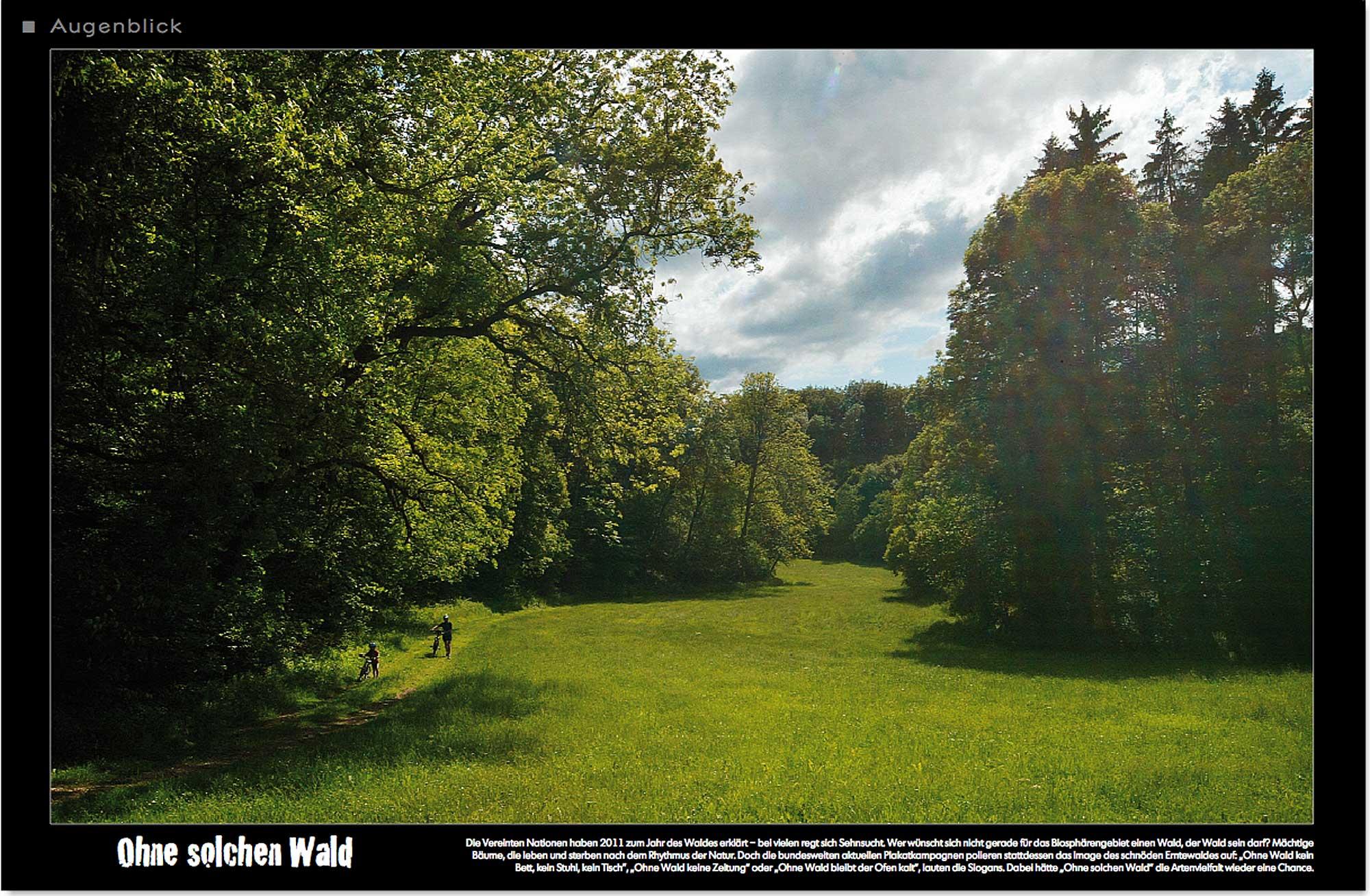 Wald_Baum_Lichtung